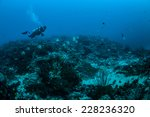 diver and group of longfin... | Shutterstock . vector #228236320