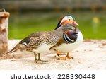 Couple Of Mandarin Duck Restin...