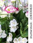 beautiful wild flowers... | Shutterstock . vector #228330820