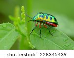 colorful shield bug | Shutterstock . vector #228345439