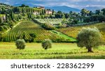 vineyards and olive trees in a... | Shutterstock . vector #228362299
