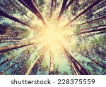 Stock photo forest retro style 228375559
