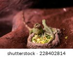 Lizards Sitting On A Plate Wit...