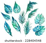 set of tropical and exotic... | Shutterstock . vector #228404548