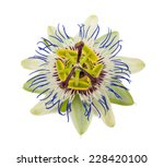 Passion Fruit Flower Isolated...