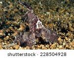 Small photo of Cockatoo waspfish swimming on the rock in Gili, Lombok, Nusa Tenggara Barat, Indonesia underwater photo. Cockatoo waspfishes are bottom-dwellers, has scientific name Ablabys taenianotus.