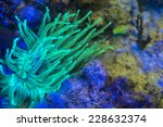 A Giant Anemone Showing Its...