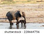 Stock photo african elephants with baby elephant drinking at waterhole hwange national park matabeleland 228664756