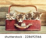 Stock photo four little kittens sitting in vintage suitcase on wooden background image with sunlight effect 228692566