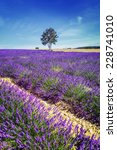 lavender field in provence ... | Shutterstock . vector #228741010