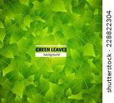 green leaves vector background. ... | Shutterstock .eps vector #228822304
