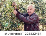 farmer at work with olive tree | Shutterstock . vector #228822484
