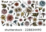 detailed hand drawn flower and... | Shutterstock .eps vector #228834490