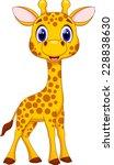 Stock vector cute giraffe cartoon 228838630