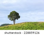 lonely tree in the top of... | Shutterstock . vector #228859126