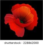 Red Poppy On A Black Background