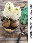 White Hyacinth Flowers And...