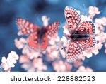 Stock photo butterflies on flowers 228882523