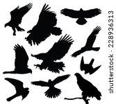 raptors eagles vector... | Shutterstock .eps vector #228936313