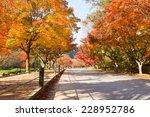 the colors of autumn in korea   Shutterstock . vector #228952786