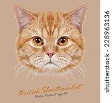 British Shorthair Cat Animal...