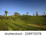 nature landscape | Shutterstock . vector #228973378