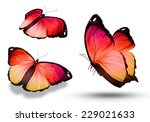 Stock photo three butterflies isolated on white 229021633