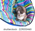 Stock photo lounger cat isolated on white background 229053460