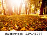yellow  orange and red autumn... | Shutterstock . vector #229148794