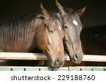 Two Thoroughbred Horses...