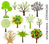 tree super collection of... | Shutterstock .eps vector #229244260