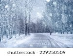 Winter Road In Snowy Forest...
