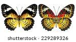 leopard lacewing butterfly ... | Shutterstock . vector #229289326