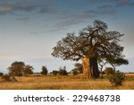 African Landscape With A Big...