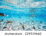 fish and black tipped sharks...   Shutterstock . vector #229519660