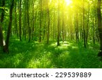 sunlight in the green forest ... | Shutterstock . vector #229539889