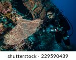 diver and sea fan gorgonia in... | Shutterstock . vector #229590439