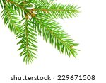 green banch of fir isolated on... | Shutterstock . vector #229671508