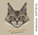 Maine Coon Cat Animal Cute Face....