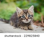 Stock photo tabby kitten sitting 229825840