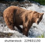 Brown Bear Takes A Break From...
