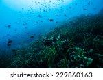 fish school | Shutterstock . vector #229860163