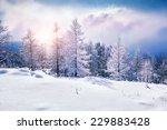 snow covered trees in the... | Shutterstock . vector #229883428