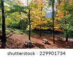 One Of Several Picnic Areas Of...