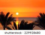 Beautiful Landscape With Palms...