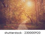 vintage photo of autumn forest... | Shutterstock . vector #230000920