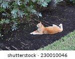 cat  animal  nature   | Shutterstock . vector #230010046