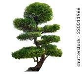 green bonsai tree isolated on... | Shutterstock . vector #230011966