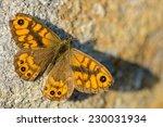 Small photo of The Wall Brown, Lasiommata megera