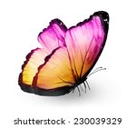 Stock photo color butterfly isolated on white 230039329